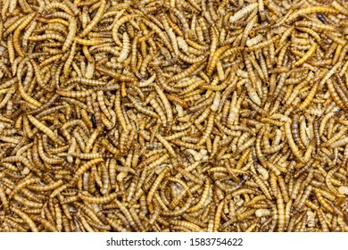 A background of dried mealworms