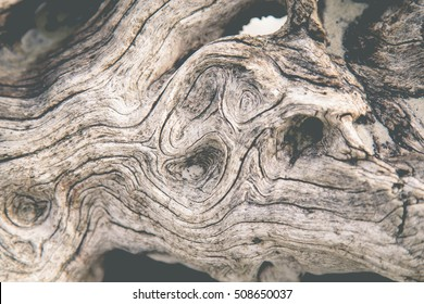 Background of driftwood.