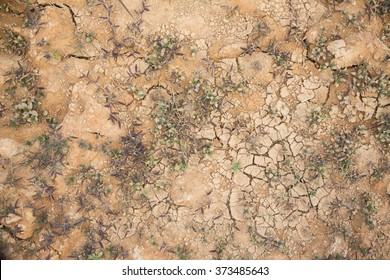 background of dry soil with green grass