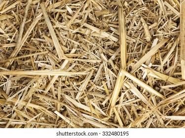 Background of dry straw