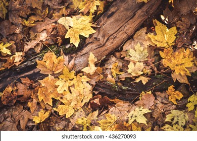 background dry yellow leaves with a log on the ground, filter
