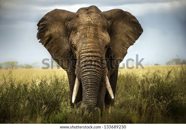 background elephant
