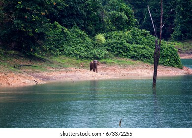 Background Elephant walk near the riverside on a rainy day in the nature, Klong Saeng Wildlife Sanctuary, Surat Thani, Southern of Thailand