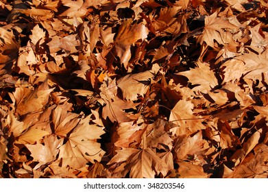background of fallen autumn leaves dry