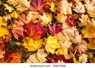 Background of fallen autumn leaves on the ground