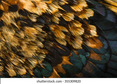 background feather rooster closeup