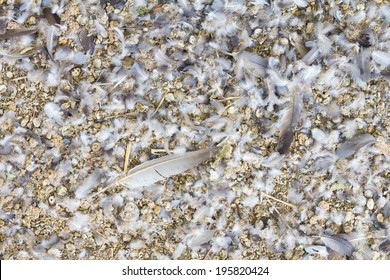 Background of feces and feathers of pigeons, which are available everywhere