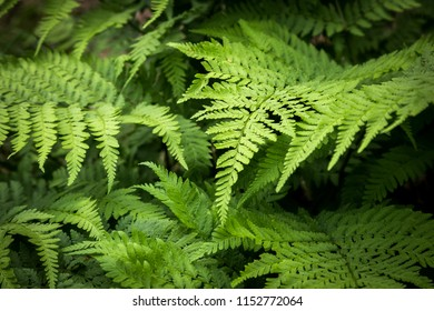 background of the fern
