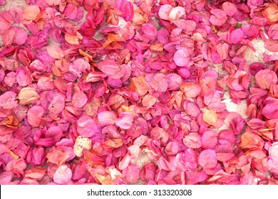 background filled with little pink flower petals