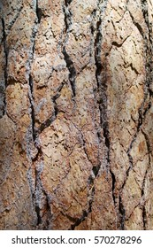 background with fir tree bark