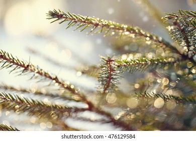 Background with fir-tree branches with patches of light from sunshine.