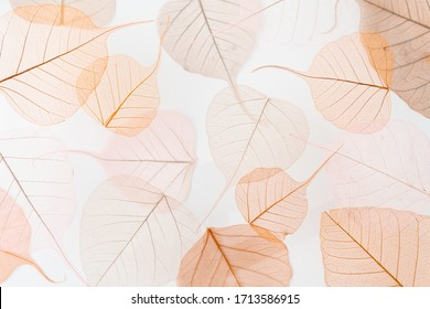 Background floral pattern of dry skeleton leaves. Levitation effect and pastel colors.