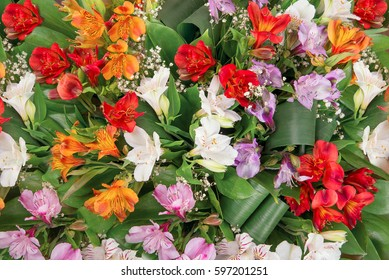 Background of flowers Alstroemeria