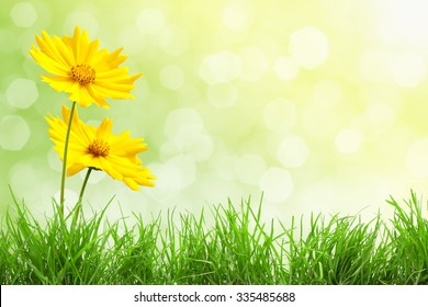 Background with Flowers and Grass
