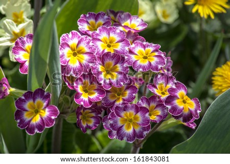 Background Flowers On Spring Day Stock Photo Edit Now 161843081