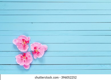 Background with flowers pink orchid on blue painted wooden planks. Place for text. Top view with copy space
