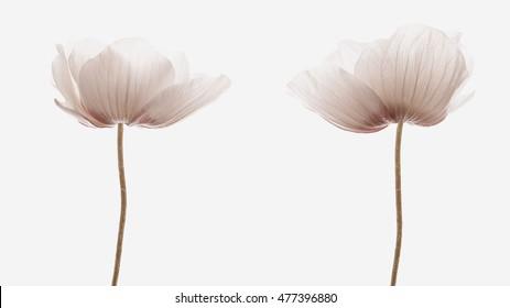 background flowers vintage effect