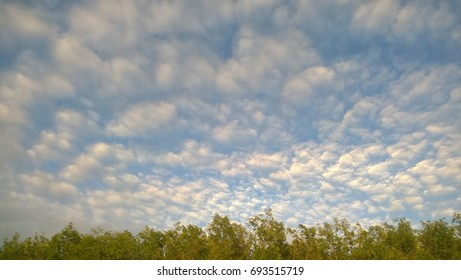 Background of fluffy broken clouds in blue sky over treetops