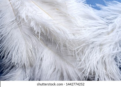 background of fluffy white ostrich feathers closeup
