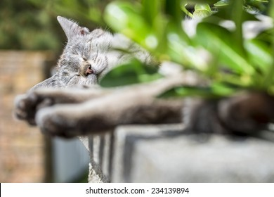 In background focus on the head of an adult tabby cat sleeping lengthened on a low wall. Portrait of domestic cat. Color image