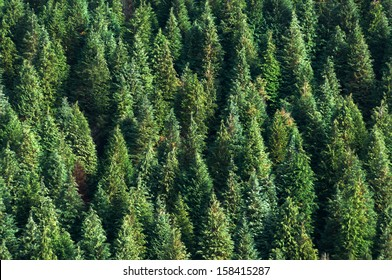 background with forest of pines