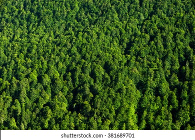 background forest view from above, green forest nature texture