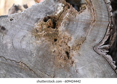 Background with a fragment of a tree trunk