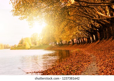 Background fresh beautiful windy cold autumn warm season in river park garden with yellow red orange gold with walkway  walk, jogging, run, bike in vacation holiday weekend sunrise sunset in europe