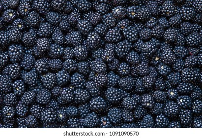 Background from fresh Blackberries, close up. Lot of ripe juicy wild fruit raw berries lying on the table. Top view, Flat lay