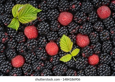 Background from fresh organic blackberries and raspberries, close up. Lot of ripe juicy wild fruit raw berries lying on the table. Top view blackberry and raspberry
