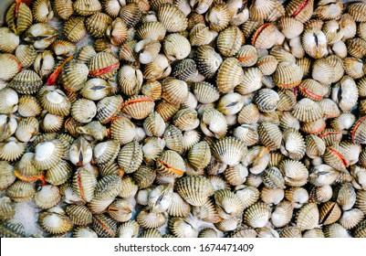 Background Fresh Raw shellfish cockles