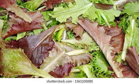 A background of fresh Spring Mix lettuces.  Red and green leaf lettuce, mizuna, romaine and mustard greens