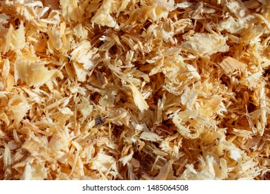 Background from fresh woody yellow shavings.  Sawdust. Top view.
