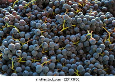 Background of freshly picked grapes