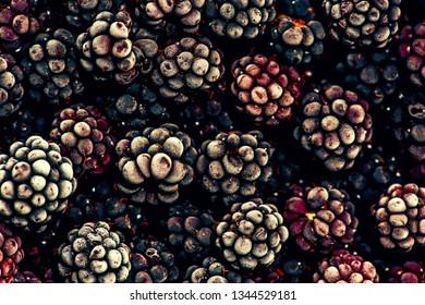 Background of frozen black berries