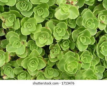 Background full of small green leaves