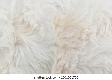 Background fur texture white brown furry close up beautiful guidelines fur