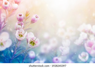 background of garden flowers with copy space. natural background