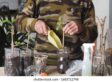 Background for gardening. A man plants grape cuttings in plastic containers for the growth of seedling roots. Reproduction of a vineyard.