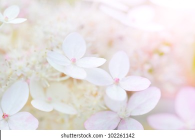 background with gently rose flowers