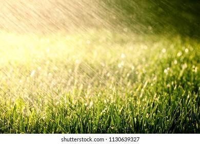 a background grass