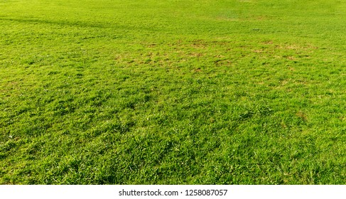 background of grass texture