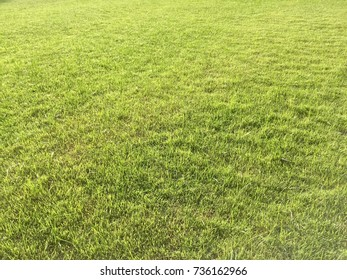 Background of grasss lawn yard, meadow lawn yard.