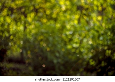 Background of green bokeh