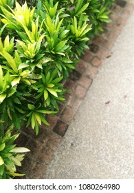 background of green bush and footpath