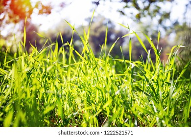 background - green grass and blue sky