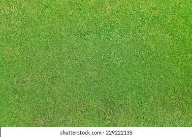 background of green grass field