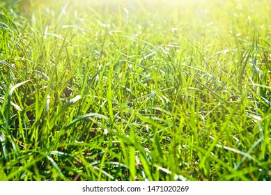 background of green grass on a sunny day
