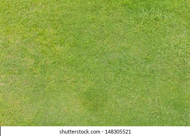 Background of green grass that grows irregularly, but also beautiful.