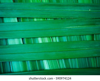 Background green leaves